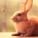 Sevimli Tavşan 1