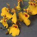 Solmuş Çiçekler
