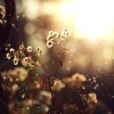 Üfleme Çiçegi
