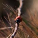 Uğur Böceği  11