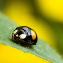 Uğur Böceği 5