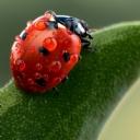 Uğur Böceği 9