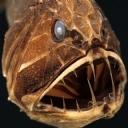 Vahşi Balık