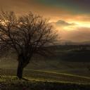 Yanlız Ağaç