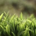 Yeşil Bitki