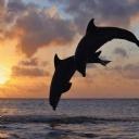 Yunus Balıkları