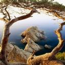 Ağaç Deniz Manzara