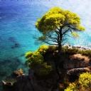 Ağaç ve Deniz