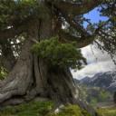Ağaç ve Manzara