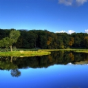 Ağaçlar ve Güzel Göl