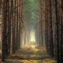 Ağaçlar ve Sis 2
