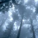 Ağaçlar ve Sis