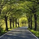 Ağaçlarla kaplı Yol