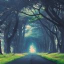 Ağaçlı Yol 1