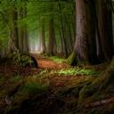 Ağaçlı Yol 2