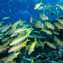 Avustralya Okyanusu