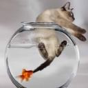Balık ve Kedi