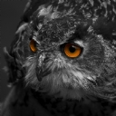 Baykuşlar 6