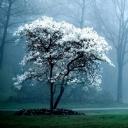 Beyaz Ağaç