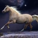 Beyaz At 2