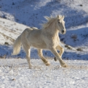 Beyaz At 3
