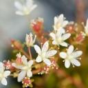 Beyaz Çiçek 3