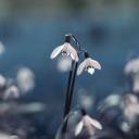 Beyaz Çiçek 6