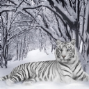 Beyaz Kaplan