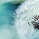 Çiçek 1