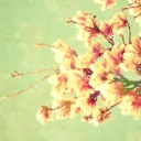 Çiçekler 1