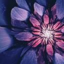 Çiçekler 10
