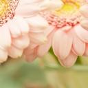 Çiçekler 3