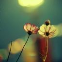 Çiçekler 9
