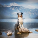 Dağ ve Köpek