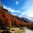Dağ ve Orman