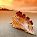 Deniz kabuğu 1