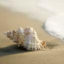 Deniz kabuğu 2