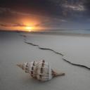 Deniz kabuğu 4