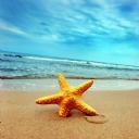 Deniz Yıldızı 2