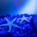 Deniz Yıldızları