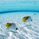 Denizaltı Manzara