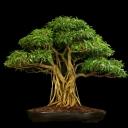 Doğa Ağaç