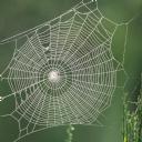 Doğa Örümcek Ağı