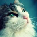Düşünen Kedi