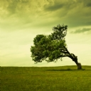 Eğik Ağaç