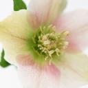 Eylül ayı Çiçeği