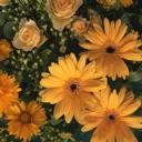 Eylül Ayı Çiçekler