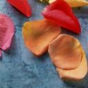 Eylül ayı Çieçekleri