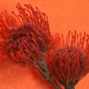 Gizemli Çiçek
