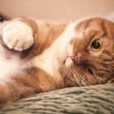 Göz Kırpan Kedi